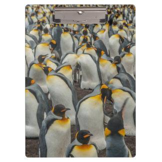 Porte-bloc Colonie de pingouin de roi, Malouines