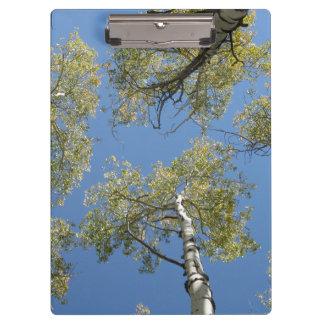 Porte - bloc d'arbres d'Aspen Porte-bloc