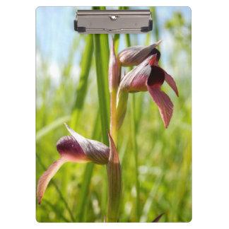 Porte - bloc d'orchidée de langue