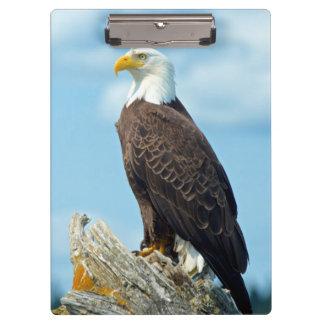 Porte-bloc Eagle chauve été perché sur le rondin, Canada