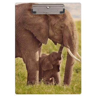 Porte-bloc Éléphant et bébé des images | de Getty