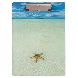 Porte-bloc Étoile de mer en eau peu profonde, Palaos