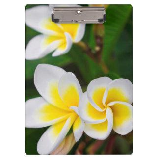 Porte-bloc Le Plumeria fleurit le plan rapproché, Hawaï