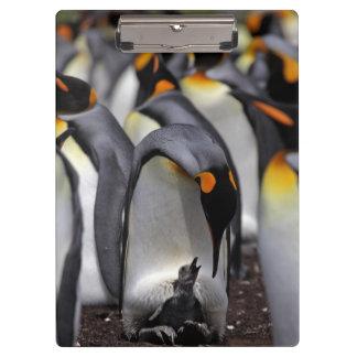 Porte-bloc Le Roi pingouin avec le poussin