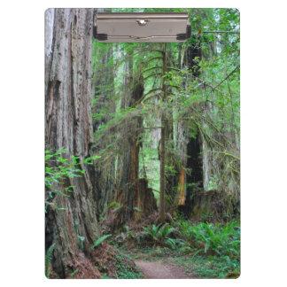 Porte-bloc Les séquoias - séquoia