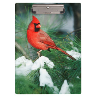 Porte-bloc Mâle cardinal du nord sur l'arbre, IL
