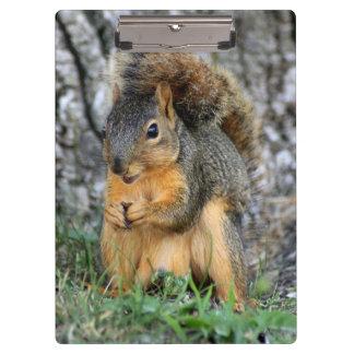 Porte - bloc mignon d'écureuil