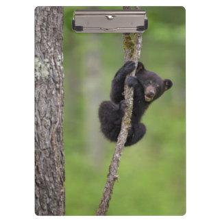 Porte-bloc Petit animal d'ours noir jouant, Tennessee