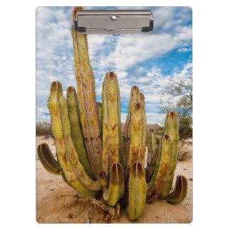 Porte-bloc Portrait de cactus de vieil homme, Mexique