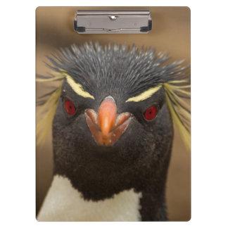 Porte-bloc Portrait de pingouin de Rockhopper