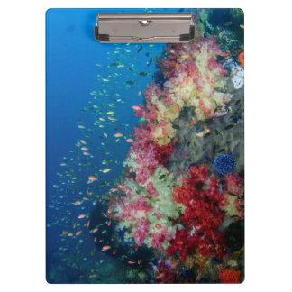 Porte-bloc Récif coralien sous-marin, Indonésie