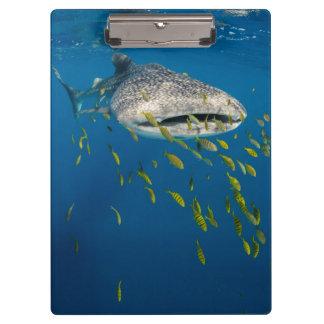 Porte-bloc Requin de baleine avec des poissons, Indonésie