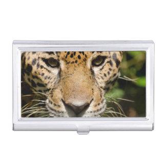 Porte-cartes De Visite Jaguar captif dans la clôture de jungle