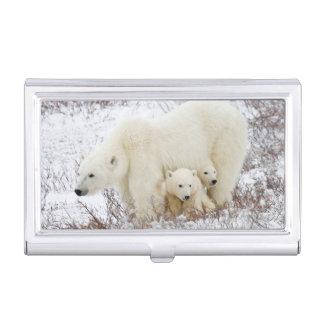 Porte-cartes De Visite Ours blancs femelles et deux petits animaux