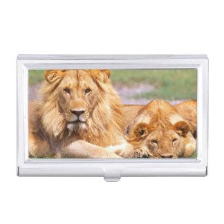 Porte-cartes De Visite Paires de lions africains, Panthera Lion, Tanzanie