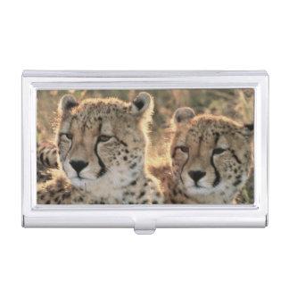 Porte-cartes De Visite Plan rapproché des guépards