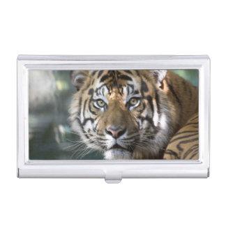 Porte-cartes De Visite Tigre masculin de Sumatran (sumatrae du Tigre de