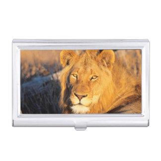 Porte-cartes De Visite Un lion Maned rouge regardant l'appareil-photo