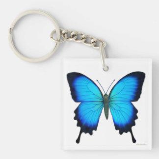Porte - clé bleu de papillon d'Ulysse Porte-clé Carré En Acrylique Double Face