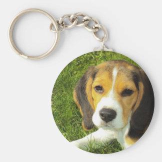 Porte - clé de beagle porte-clés