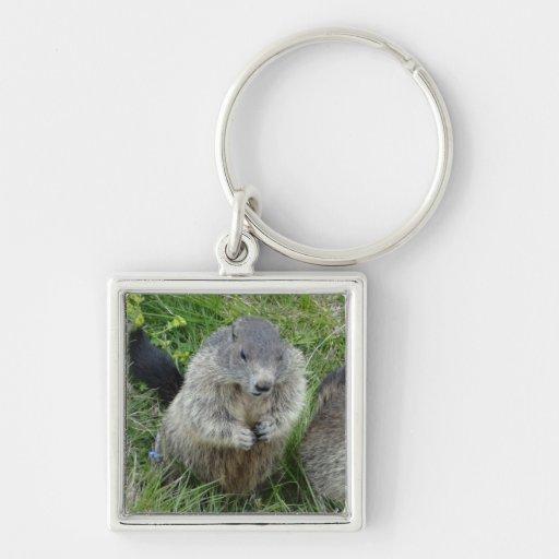 Porte - clé de Marmot Porte-clé