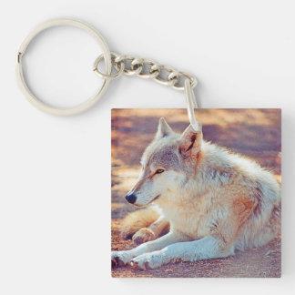 Porte-clefs Beau repos de loup -