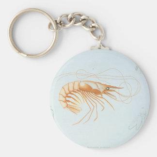 Porte-clés Anatomie vintage de crevette, animaux d'océan