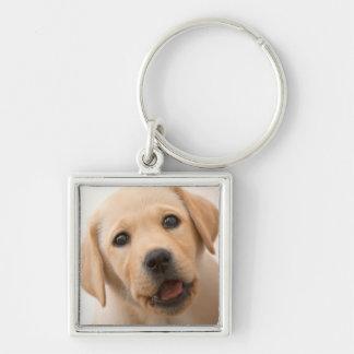 Porte-clés Chiot d'or de Labrador