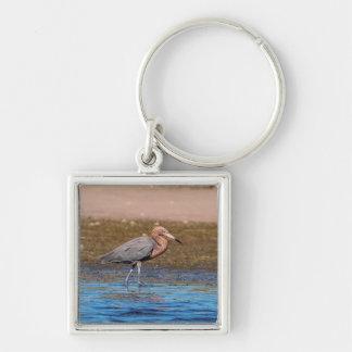 Porte-clés Héron rougeâtre sur la plage du nord