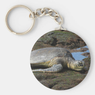 Porte-clés Honu se reposant sur les roches chaudes