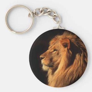 Porte-clés Lion masculin africain photographié par Steven