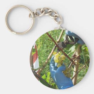 Porte-clés Main coupant les raisins blancs, temps de récolte