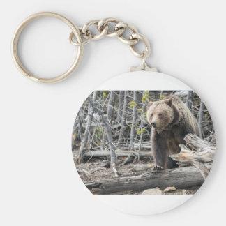 Porte-clés Ours gris en parc national Etats-Unis de