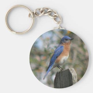 Porte-clés Porte - clé oriental de mâle d'oiseau bleu