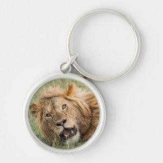 Porte-clés Repos masculin de lion