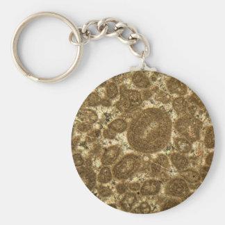 Porte-clés Section mince de chaux paléozoïque sous la MICR