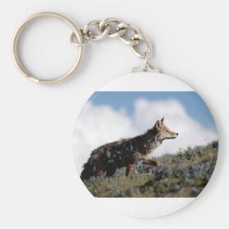 Porte-clés Un coyote marche en parc national de Yellowstone,