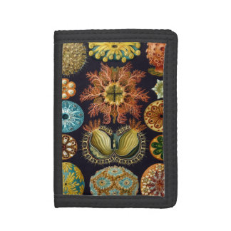 Portefeuille À 3 Volets Ascidiae par Ernst Haeckel, animaux marins