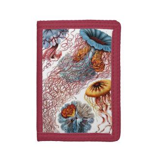 Portefeuille À 3 Volets Méduses vintages par Ernst Haeckel, Discomedusae