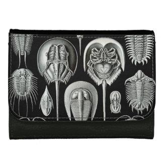 Portefeuille Aspidonia d'Ernst Haeckel