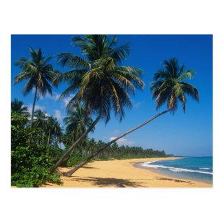 Porto Rico, Isla Verde, palmiers Carte Postale