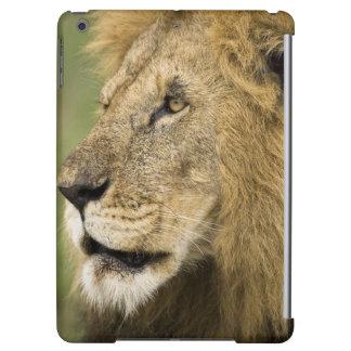 Portrait africain de lion, Panthera Lion, dans