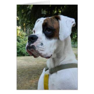 Portrait blanc de chien de boxeur cartes
