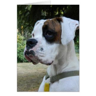 Portrait blanc de chien de boxeur cartes de vœux