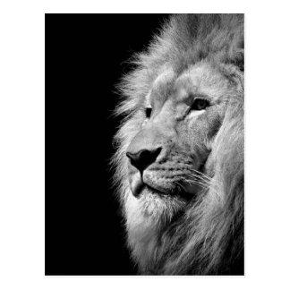 Portrait blanc noir de lion - photographie animale cartes postales