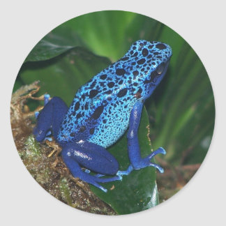 Portrait bleu de grenouille de flèche de poison sticker rond