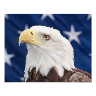 Portrait d Eagle chauve avec des étoiles Photos D'art
