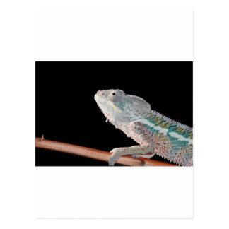 portrait d un caméléon de panthère de mâle pair d carte postale