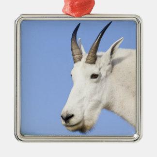 Portrait de Billy de chèvre de montagne au passage Ornement Carré Argenté