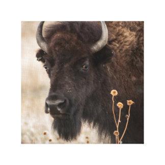Portrait de bison américain toiles tendues sur châssis